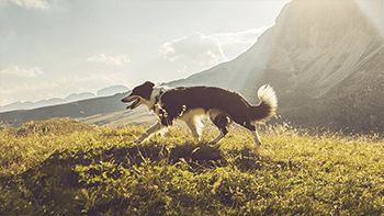 applications in pet food ingredients Vestkorn produces a variety of pet food ingredients, all 100% natural Vestkorn natural ingredients since 1855